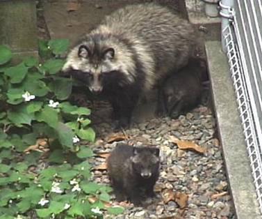 http://www.jsc-com.net/shimoochiai/news/098.files/image015.jpg